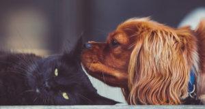 15 домашних питомцев — от самых любящих до тех, кому на вас наплевать