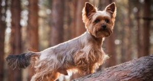 Сколько лет живут собаки? ТОП-10 пород собак-долгожителей