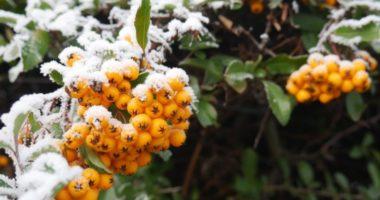Как употреблять замороженную облепиху зимой?
