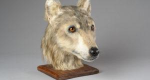 Как выглядели шотландские собаки 4 500 лет назад