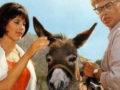 Легко ли быть ослом? Часть 5: упрямый или смиренный?