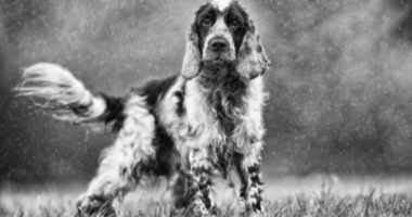 Корсар. Что нужно собаке для счастья? Часть 2