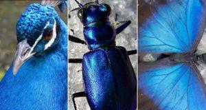 Почему в природе так мало живых существ синего цвета?
