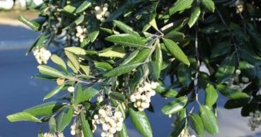 Чем интересны монотипные семейства растений?