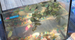 Как делают бизнес на черепахах?