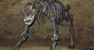 Ископаемый медведь оказался вегетарианцем