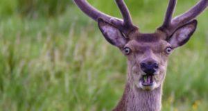10 самых забавных фотографий животных 2018 года