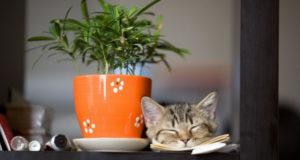 Как спасти комнатные растения от посягательств домашнего любимца?