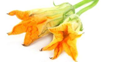 Что можно приготовить из цветков тыквы? Цветочные голубцы и не только