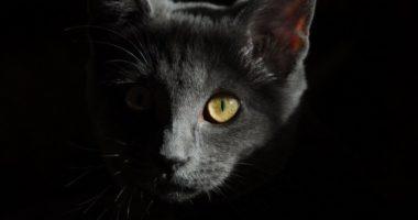 Что такое кошка и почему мы ее любим: научный подход