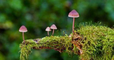 Какие лесные грибы съедобны?