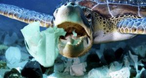 Пластик в океане, или как человек разрушает природу: фото