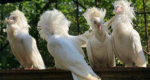 Кто украсит усадьбу? Необыкновенные птицы!