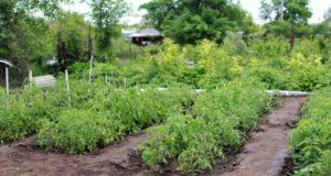 Кто такой Огородник и как он помогал нашим предкам?