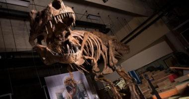 Крупнейший известный тираннозавр рекс