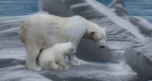 Удивительное царство животных. Какие бывают мамы?