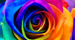 Тайна розы