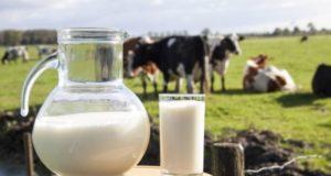 Как правильно пить молоко?