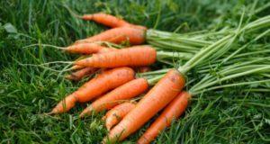 Почему морковка стала оранжевой?