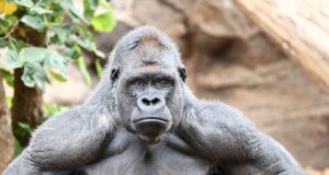 Для чего в СССР обезьянам отдали остров?