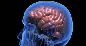 Мозг современных людей становится меньше: неужели мы глупеем?