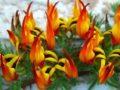 Как приобщиться к сохранению исчезающих растений? Экзотика на подоконнике