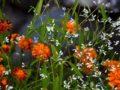 Что посадить в цветнике? Семь аргументов в пользу однолетников