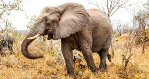В чём сходство слона с металлургическим производством?