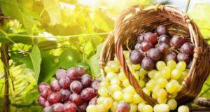 Как подготовить саженцы винограда к зиме? Личный опыт