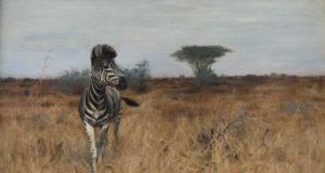 Зебра — белая с чёрным, или чёрная с белым?