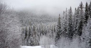 Зачем в дебрях сибирских лесов воруют снег? Байки бывшего лесника