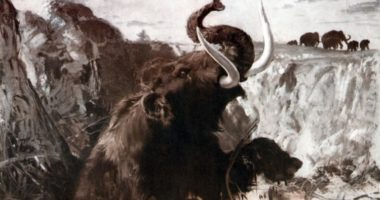Почему Россия — Родина слонов?