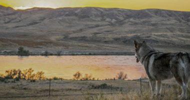 Где водились самые древние собаки на Земле: путешествие из Сибири в Америку