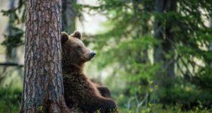 Первая любовь. Встретить медведя — к удаче?