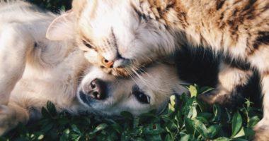 Домашнее животное. Краткий курс счастливой жизни