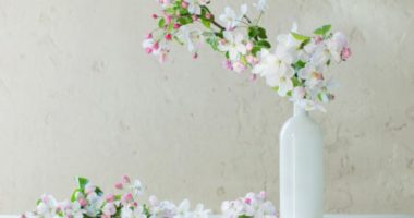 Выгонка веток растений. Надо ли приближать весну?