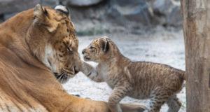 Удивительное рядом: каких животных создал человек?
