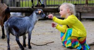 Почему нужно закрыть контактные зоопарки?