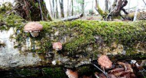 Можно ли лечиться грибами?