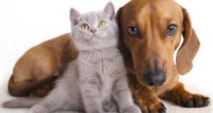 В чем причина запоров у кошек и собак?