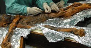 Какие загадки скрывает кишечник ледяной мумии: таинственный Эци