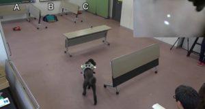 Радиоуправляемая собака, или GPS для пса